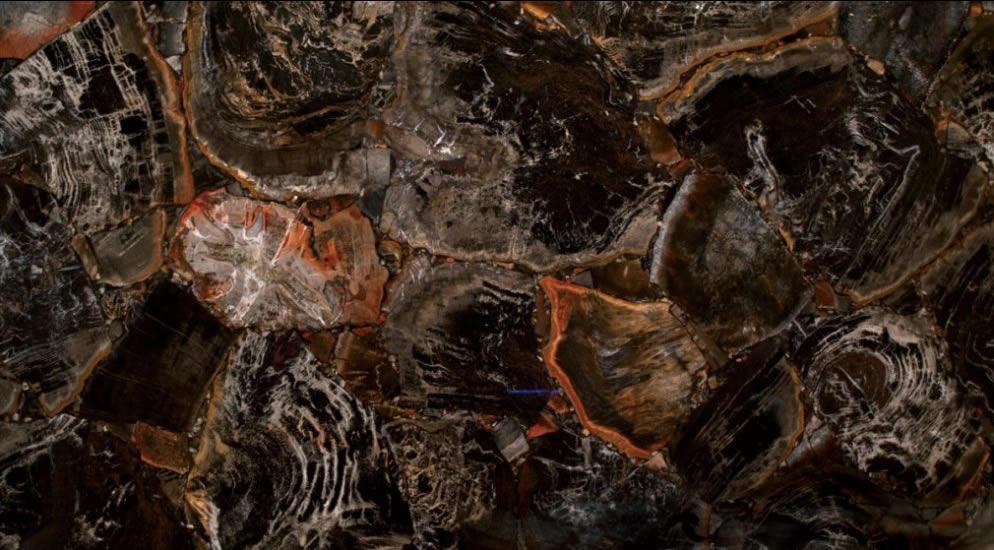 купить Black Petrified Wood