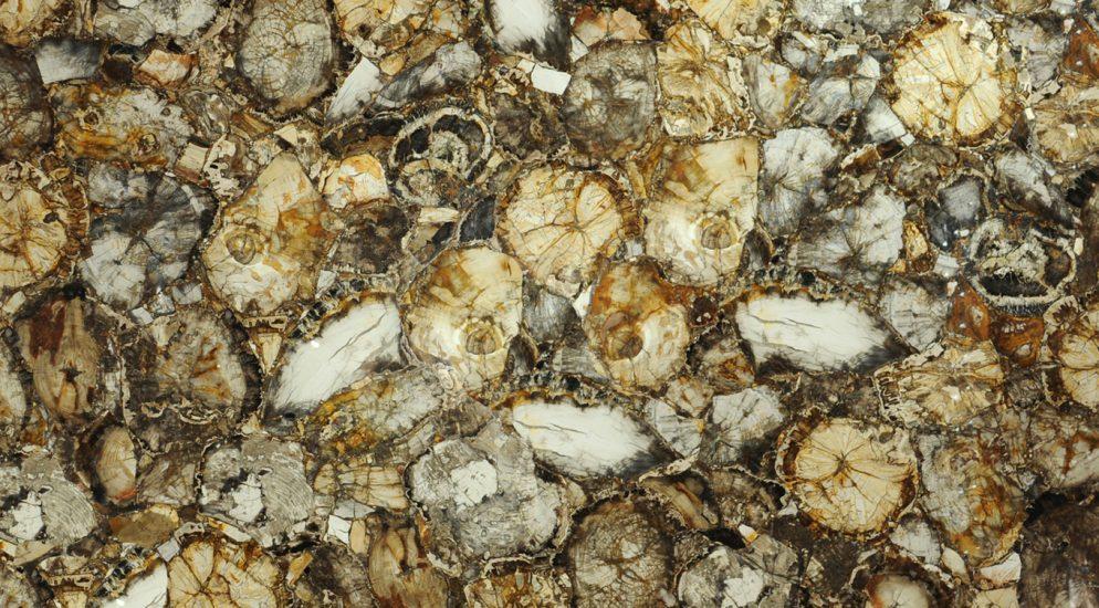 купить Natural Petrified Wood